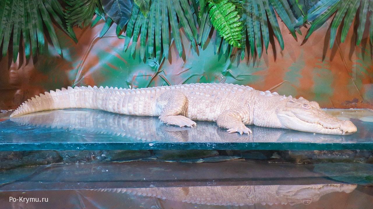 Ялтинский крокодиляриум.