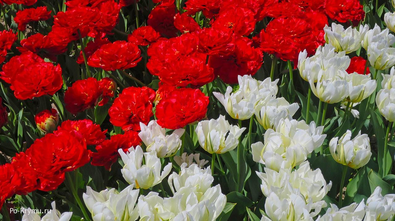 Что цветет в Никитском ботаническом саду в мае.