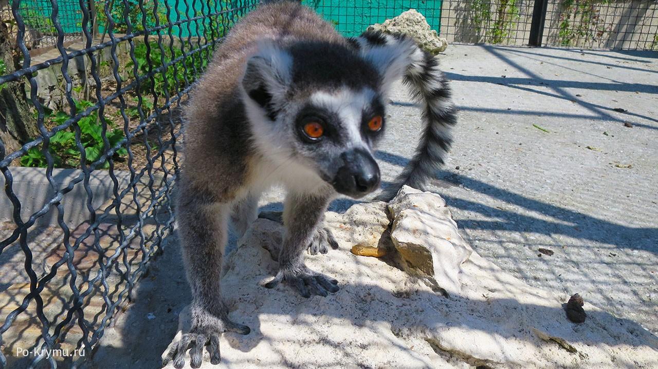Детский контактный зоопарк Тайгана