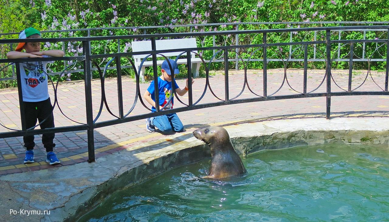 Бассейн с морским котиком в Тайгане