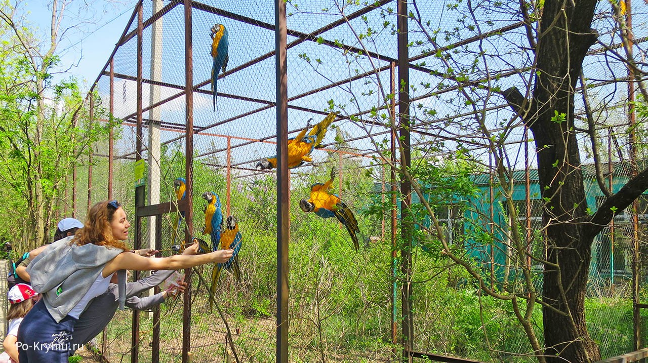 Сафари-парк Тайган, Крым, Белогорский район, попугаи