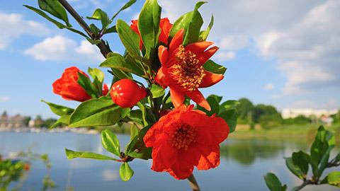 Что цветет в Крыму в июне