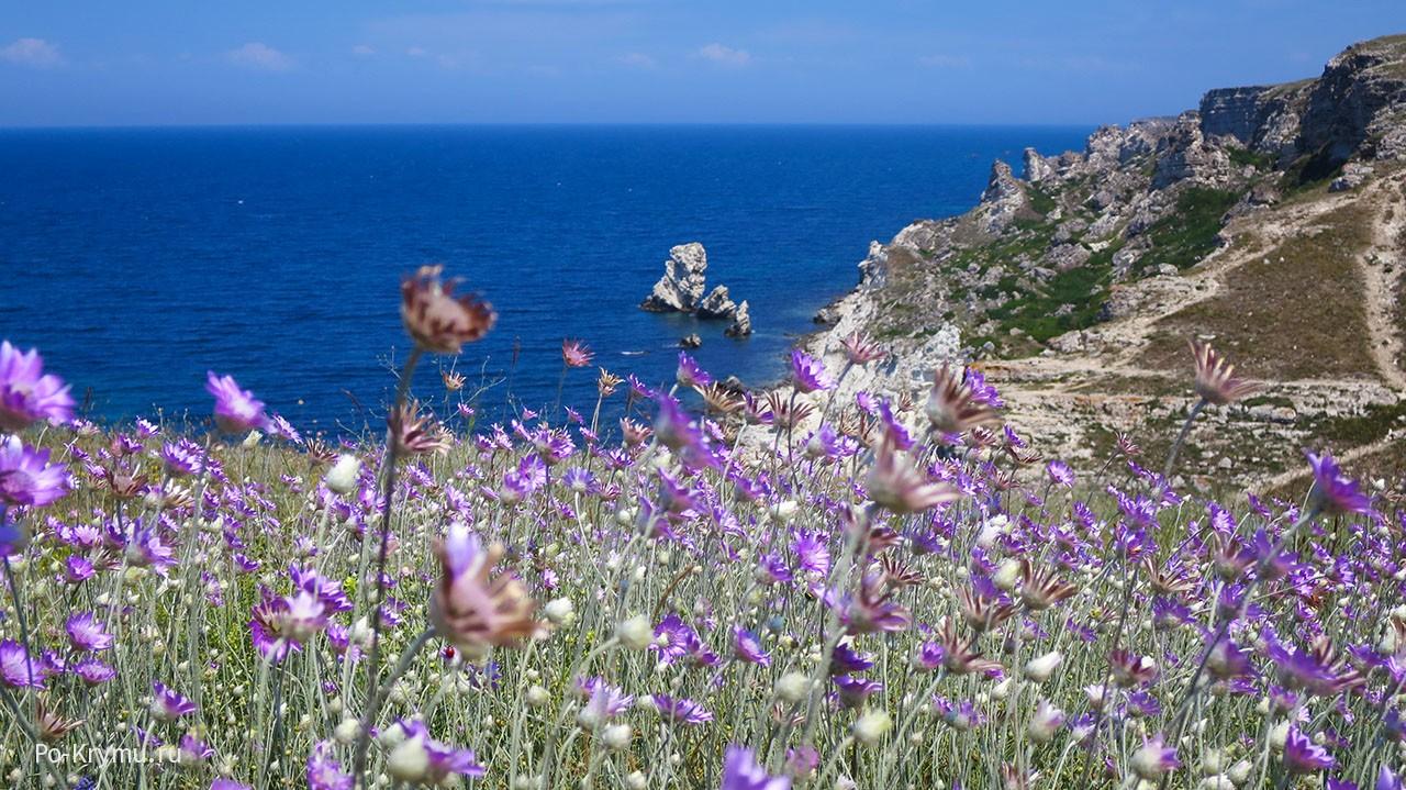 Крым, Джангуль, сухоцветы