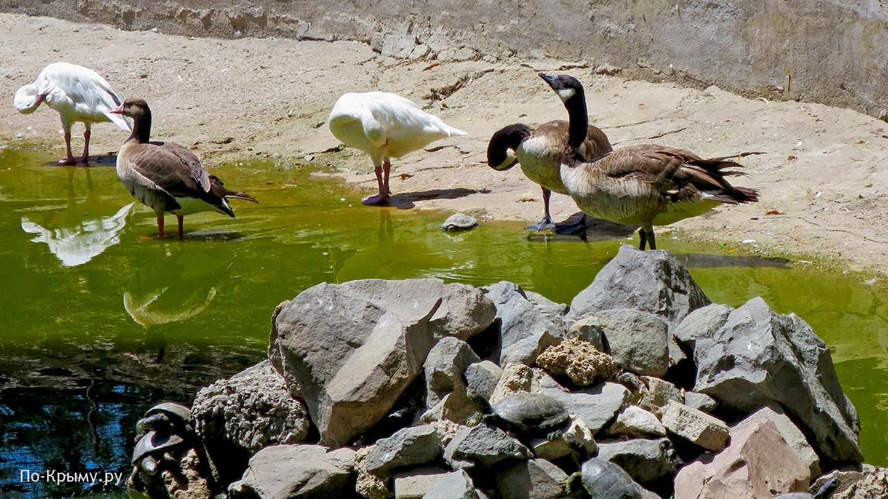 Бассейн с водоплавающими