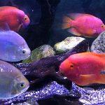 «Подводный грот» — аквариум в Ялте