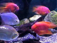 Грот-аквариум в Ялте