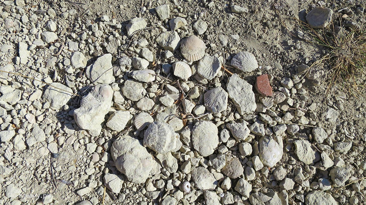 Археологические и палеонтологические находки Тепе-Кермена