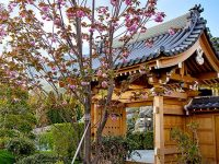 Фестиваль сакуры в Мрии