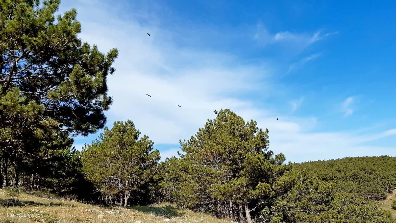Лесопосадки на Суздальской горе в Севастополе