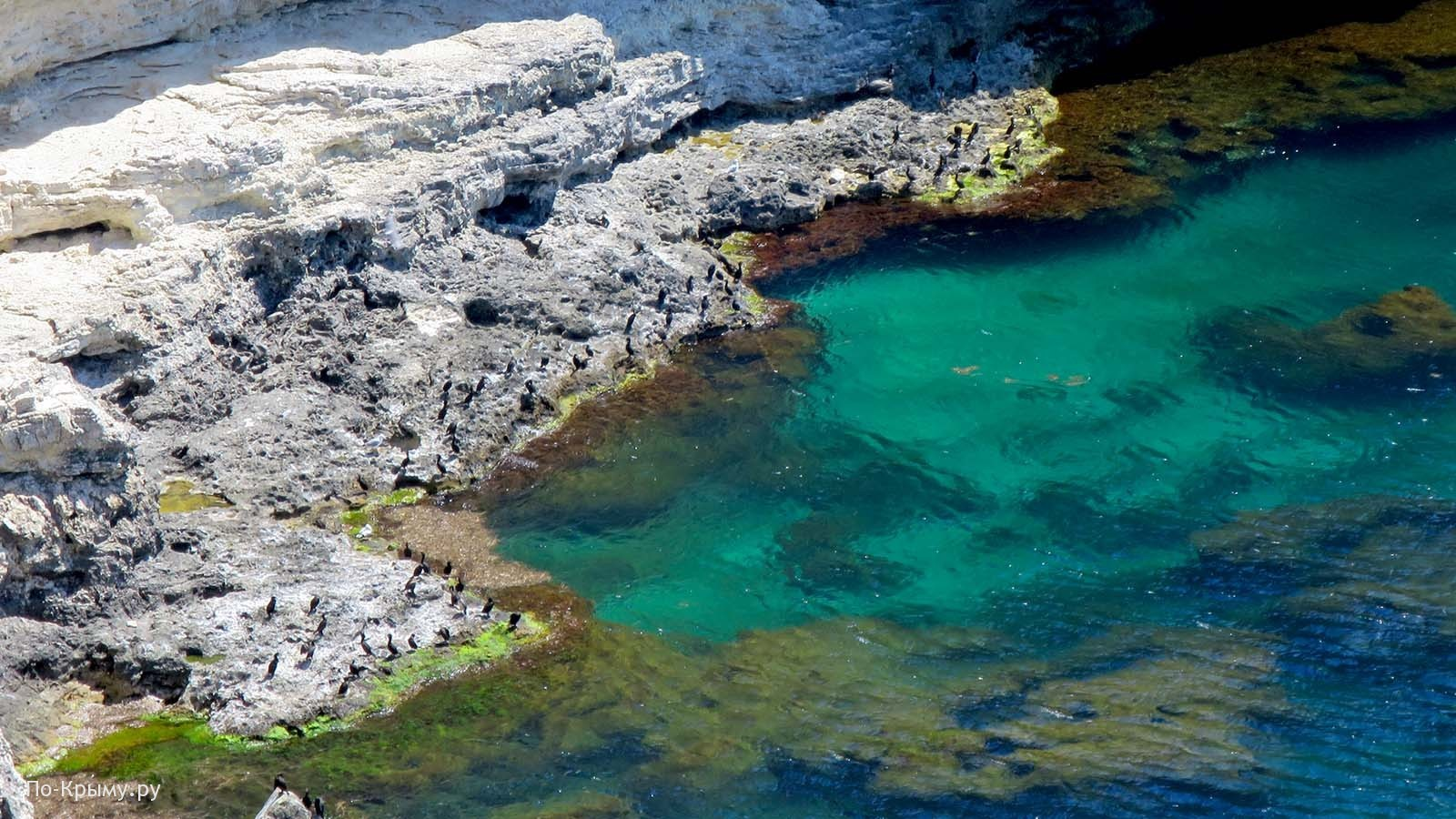 Крым, бакланы на скалах Тарханкута