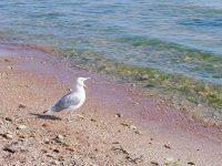Городские пляжи Евпатории