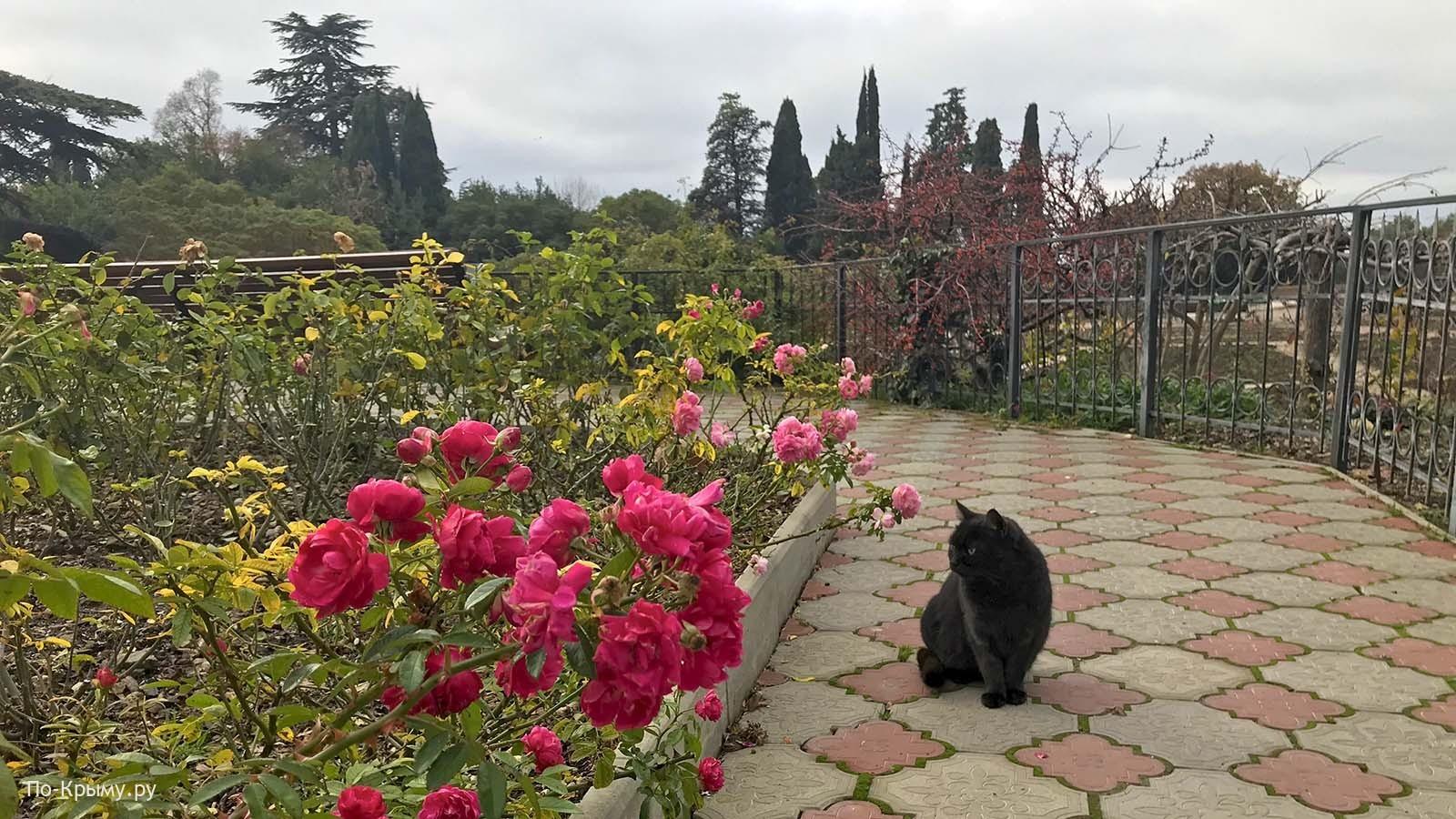 Розы и котики Никитского ботанического сада