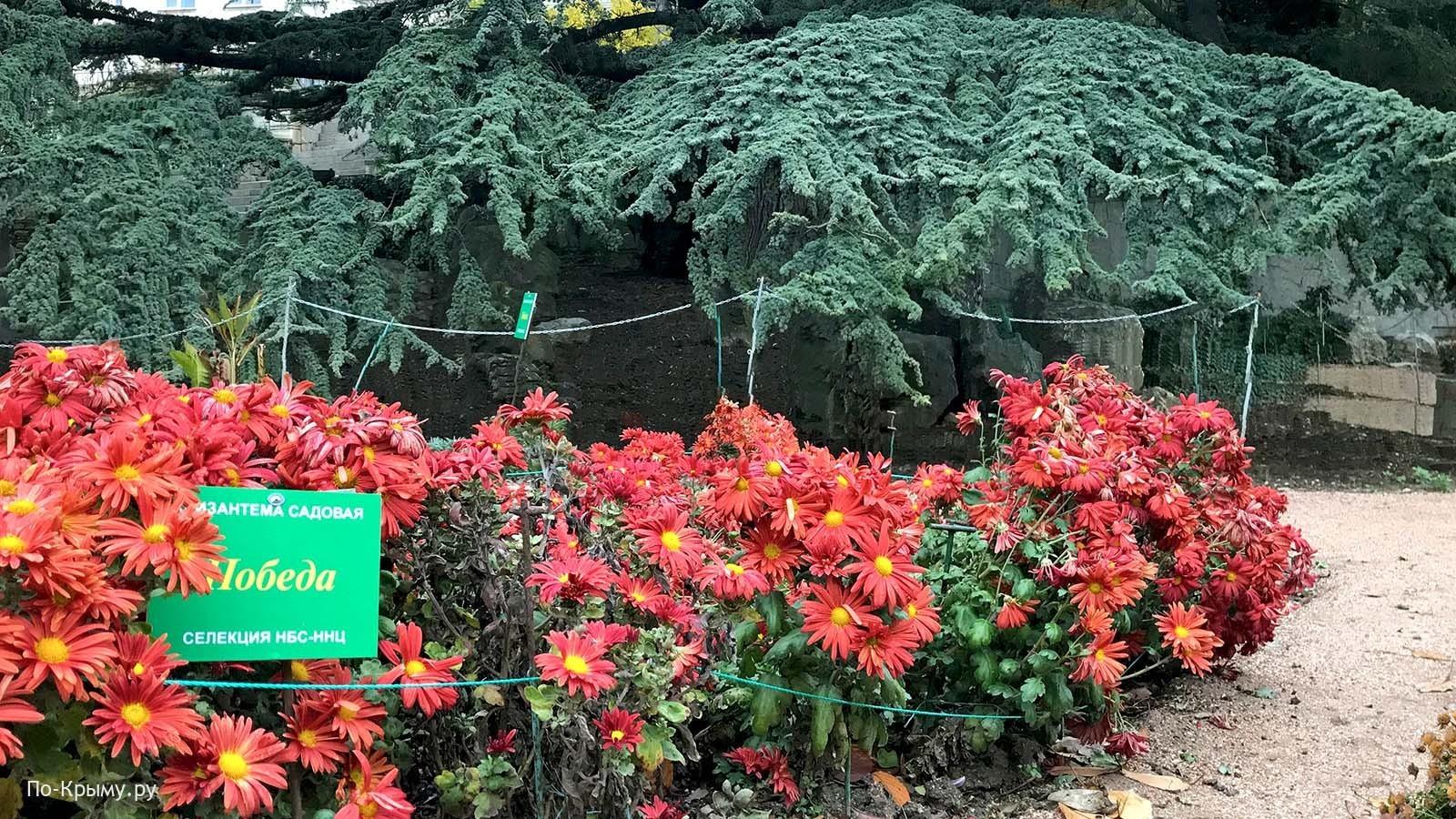 Бал хризантем, декабрь