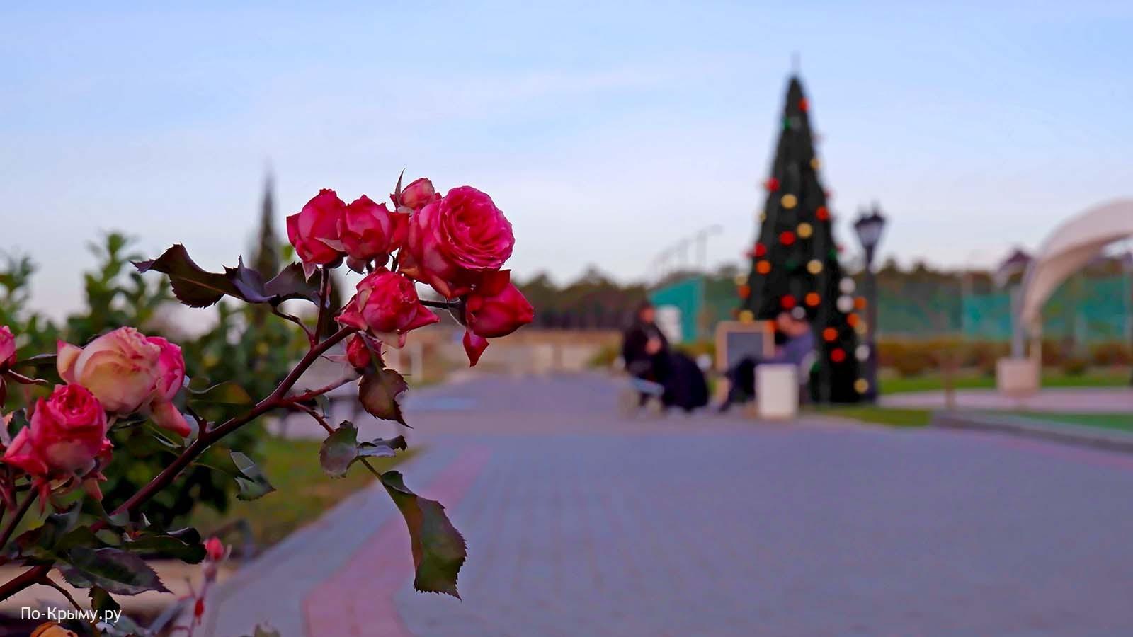 Что цветет в Крыму в декабре