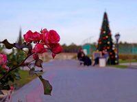 Крым в декабре