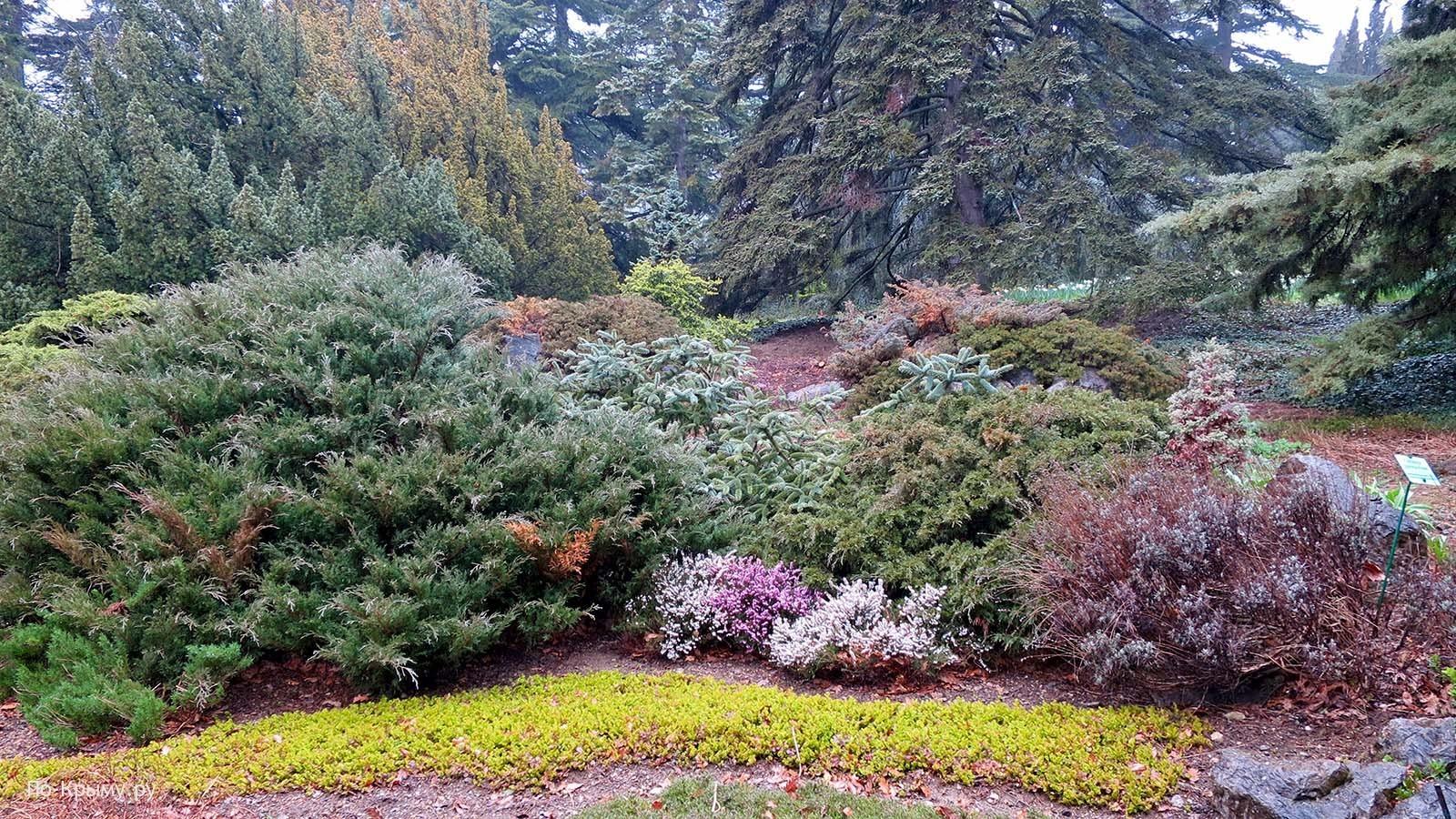 Крым, межсезонье, Никитский ботанический сад