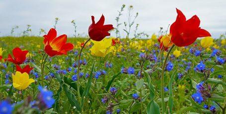 Необычный первомай в Крыму, часть II — тюльпаны и розовые озера Опука