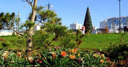 Что цветет в Крыму в январе